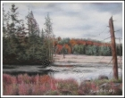 Algonquin Nationalpark, Ont. - Autumn