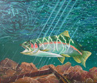 Rainbow Trout (2005) - Dida